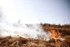 Wildfire. Fire. Global warming, environmental catastrophe. Conce Royalty Free Stock Images