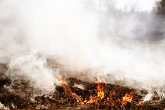 Wildfire. Fire. Global warming, environmental catastrophe. Conce Royalty Free Stock Photo