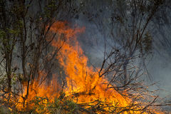Wildfire Stock Photos