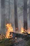 Wildfire in forest stock images