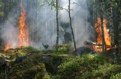 Wildfire, Forest, Ecosystem, Vegetation stock photos