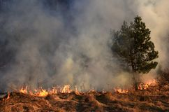 Wildfire, forest fire, burning forest. Field fire stock photography