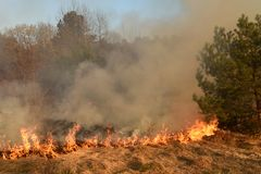 Wildfire, forest fire, burning forest stock photo
