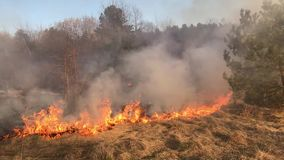 Wildfire, forest fire, field fire, stock footage