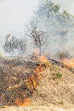 Wildfire royalty free stock photography
