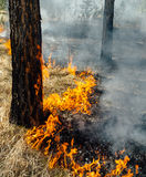 Wildfire Royalty Free Stock Photos