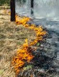 Wildfire Stock Photos