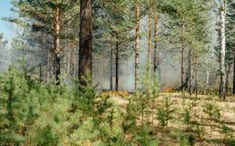 Wildfire Royalty Free Stock Photo