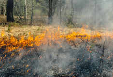 Wildfire Royalty Free Stock Image