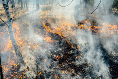 Wildfire Stock Image