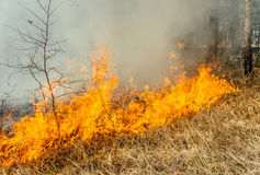 Wildfire Stock Photography