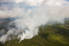 Wildfire in forest, top view Stock Photo