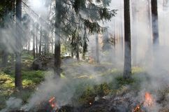 Wildfire, Forest, Tree, Smoke Royalty Free Stock Photography