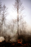 wildfire Fuego Calentamiento del planeta, catástrofe ambiental Conce Foto de archivo libre de regalías