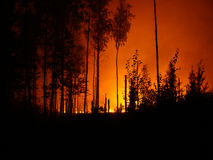 Wildfire. Furious wildfire in the forest royalty free stock photography