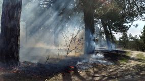 Wildfire grass. The development of forest fire Royalty Free Stock Image