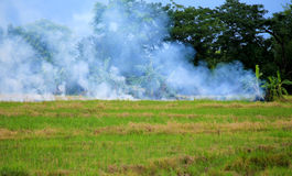 Wildfire on the green field Stock Images