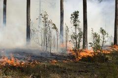 Wildfire in het bos Stock Afbeeldingen