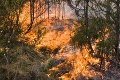 Wildfire in het bos Stock Afbeelding