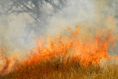 Wildfire. A larg wildfire , running crown fire, in a hot summer day royalty free stock images