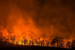 Wildfire line on hill at night. Red flowers destroy everything royalty free stock photo