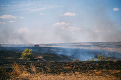 Wildfire or natural fire in fields with trees ands grass, dark smoke, natural disaster Stock Images