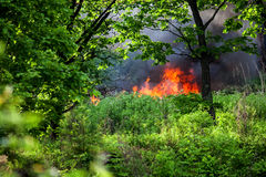 Wildfire in oak forest Stock Images
