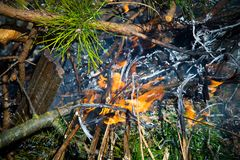 Summer dangerous forest fire royalty free stock image