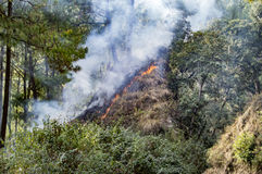 Wildfire spreading upward. The hill and burning trees and grass Stock Photos