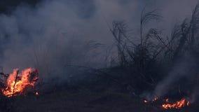 Wildfire terwijl droogte bij nacht, close-up Rook en luchtvervuiling door landbouw brandende landbouwbedrijfgebieden stock footage