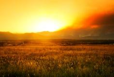 Wildfire van de Canion van Fourmile Woede royalty-vrije stock foto's