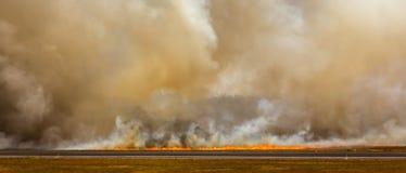Wildfire vlammen en rook omhoog onbeheerst gebrul Stock Afbeeldingen
