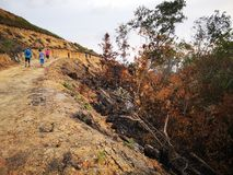 Jungle burned down and soil erosion after from a dry monsoon season. royalty free stock images