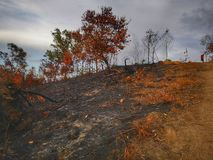 Jungle burned down and soil erosion after from a dry monsoon season. royalty free stock photography