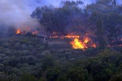 Wildfire stock photo