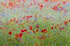 Wildflower Łąka Fotografia Royalty Free