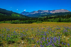 Wildflower łąka obrazy royalty free