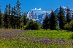 Wildflower łąka obrazy stock