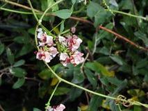 Wildflower από το αλατισμένο ίχνος φύσης σημείου στο Λάνσινγκ NYS Στοκ Φωτογραφία