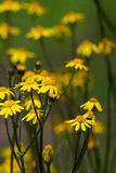 Wildflower весны Стоковая Фотография