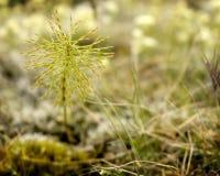Wildflower в крупном плане Стоковое фото RF