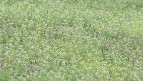 Wildflower в саде Ветер поля цветка весной Зеленая трава в ветре видеоматериал