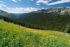 wildflower горы ландшафта Стоковые Фотографии RF