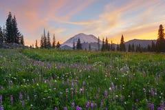 Wildflower зацветая на озере Tipsoo, Mt ненастно стоковые фото