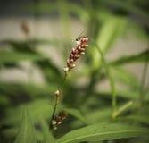 Wildflower и пчела Стоковое Изображение