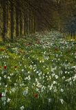 wildflower лужка Стоковые Изображения