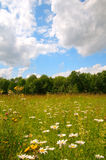 wildflower лужка Стоковое Фото