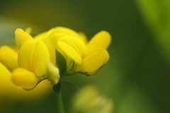 Wildflower - предпосылка Стоковое фото RF