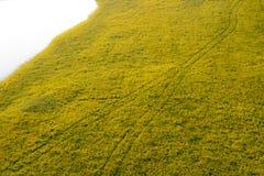 wildflower следа автошины Стоковая Фотография RF