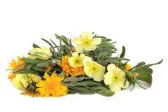 wildflower смеси листьев травы стоковые изображения rf